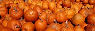 Close-up of Pumpkins--Photographic Print