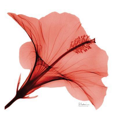 https://imgc.artprintimages.com/img/print/close-up-of-red-beauty-ii_u-l-f547yu0.jpg?p=0