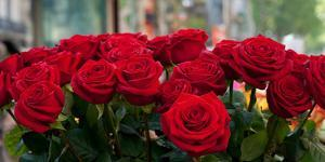 Close-Up of Red Roses in a Bouquet During Sant Jordi Festival, Barcelona, Catalonia, Spain