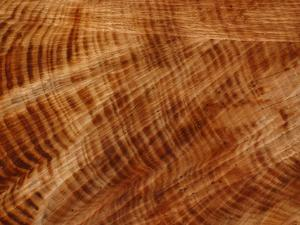 Close-up of Rings of Layers and Lines of Rough Texture on a Cut Log