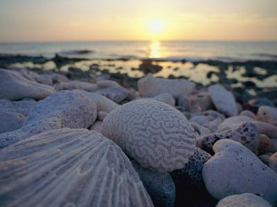 Close up of Shells and Pebbles on a Beach-Bill Curtsinger-Photographic Print