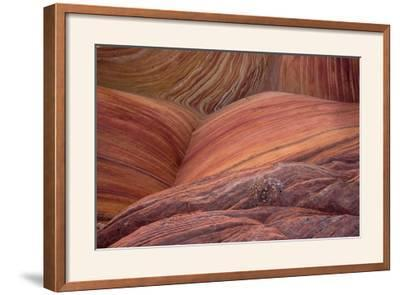 Close-up of sinuous eroded banded sandstone rocks, The Wave, Arizona-Bob Gibbons-Framed Photographic Print