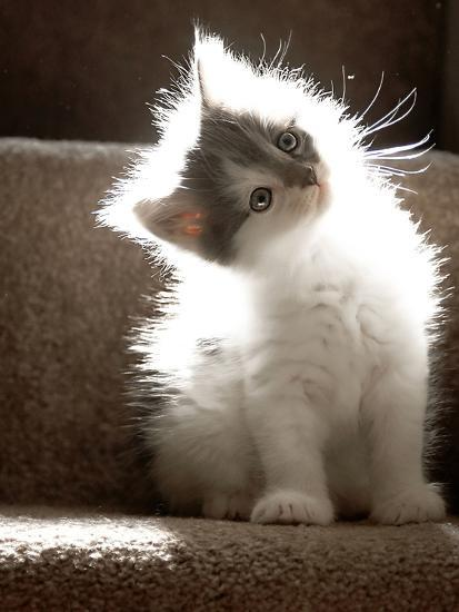 Close Up of Small Kitten Sitting at Bottom of Stairs, Glowing under Sunlight-Trigger Image-Photographic Print