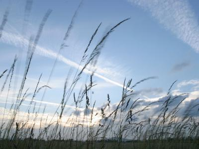 Close-Up of Tall Grass Blowing in Rural Field--Photographic Print