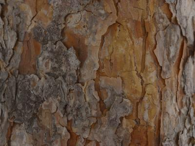 Close-Up of Texture and Pattern of Bark on Tree Trunk--Photographic Print