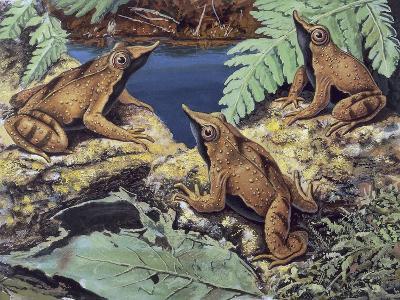 Close-Up of Three Darwin's Frogs in the Forest (Rhinoderma Darwinii)--Giclee Print