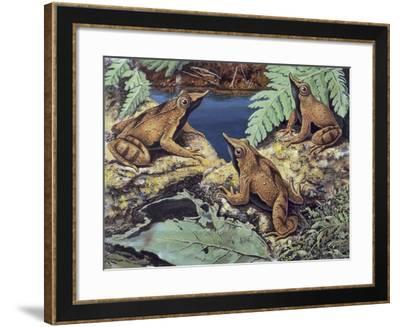 Close-Up of Three Darwin's Frogs in the Forest (Rhinoderma Darwinii)--Framed Giclee Print