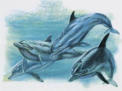 Close-Up of Three Dolphins (Delphinus Delphis)--Giclee Print
