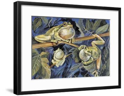 Close-Up of Three European Tree Frogs on a Tree (Hyla Arborea)--Framed Giclee Print