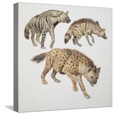 Close-Up of Three Hyena Dogs