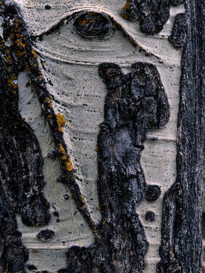 Close-up of Tree Bark-George F^ Mobley-Photographic Print
