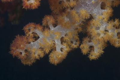 Close-Up of Tree Coral on a Fijian Reef-Stocktrek Images-Photographic Print
