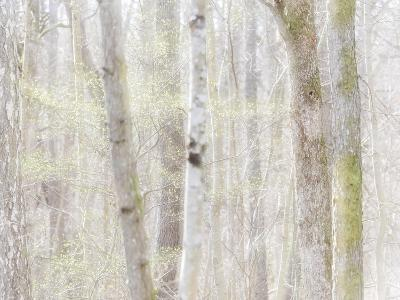 Close-Up of Trees in Forest-Utterstr?m Photography-Photographic Print