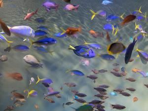 Close-Up of Tropical Fish at Miyajami Aquarium, Hiroshima Prefecture, Japan