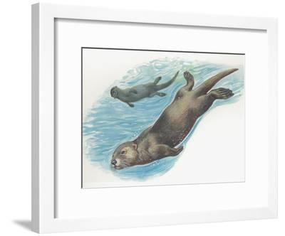 Close-Up of Two Sea Otters Swimming Undrwater (Enhydra Lutris)--Framed Photographic Print