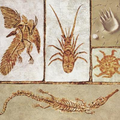 Close-Up of Various Fossils--Photographic Print