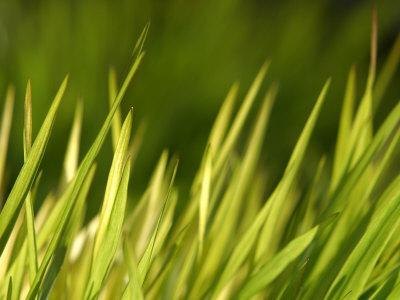 https://imgc.artprintimages.com/img/print/close-up-of-verdant-green-blades-of-grass-growing_u-l-q10x8s90.jpg?p=0