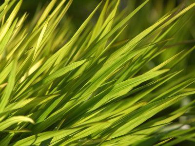 https://imgc.artprintimages.com/img/print/close-up-of-verdant-green-blades-of-grass-growing_u-l-q10x8sf0.jpg?p=0