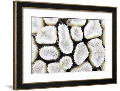 Close-Up of White Coral- StockHouse-Framed Photographic Print
