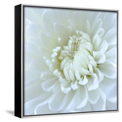 Close-up of White Flower-Clive Nichols-Framed Canvas Print