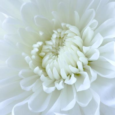 https://imgc.artprintimages.com/img/print/close-up-of-white-flower_u-l-pzl51c0.jpg?p=0