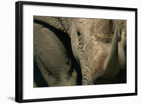 Close-Up of White Rhinoceros--Framed Photographic Print