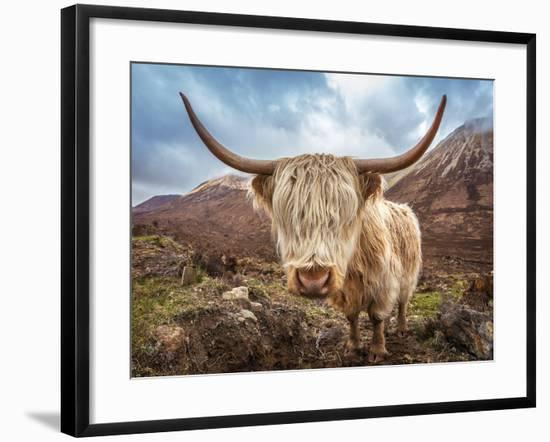Close up Portrait of a Highland Cattle at the Glamaig Mountains on Isle of Skye, Scotland, UK-Zoltan Gabor-Framed Photographic Print