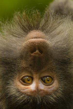 https://imgc.artprintimages.com/img/print/close-up-portrait-of-a-long-tailed-or-crab-eating-macaque-macaca-fascicularis_u-l-pyydec0.jpg?p=0