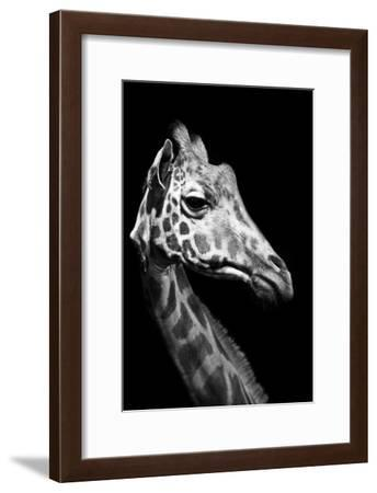 Close Up Portrait of an Endangered Rothschild Giraffe-Robin Moore-Framed Photographic Print
