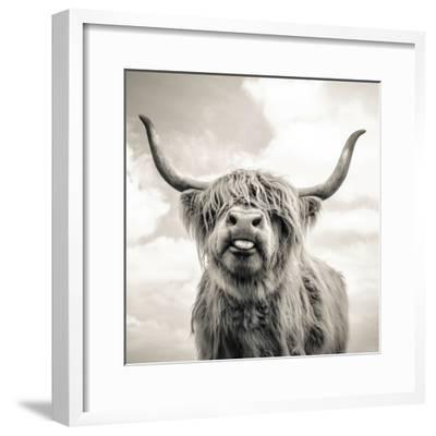 Close up portrait of Scottish Highland cattle on a farm-Mark Gemmell-Framed Photographic Print