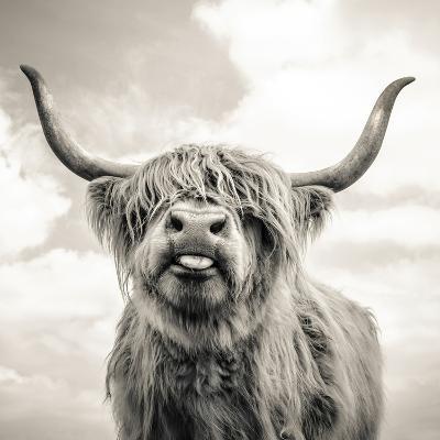 Close up portrait of Scottish Highland cattle on a farm-Mark Gemmell-Premium Photographic Print