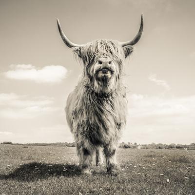 https://imgc.artprintimages.com/img/print/close-up-portrait-of-scottish-highland-cattle-on-a-farm_u-l-q1d9vkk0.jpg?p=0