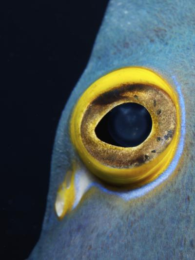 Close-Up View of a French Angelfish Eye-Stocktrek Images-Photographic Print