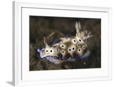 Close-Up View of a Risbecia Tryoni Nudibranch-Stocktrek Images-Framed Photographic Print