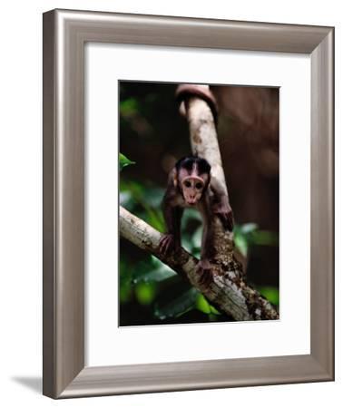 Close View of a Baby Macaque-Mattias Klum-Framed Photographic Print