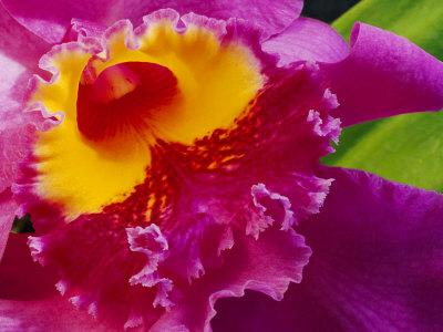 https://imgc.artprintimages.com/img/print/close-view-of-a-bright-pink-cattleya-orchid_u-l-p5vig40.jpg?p=0