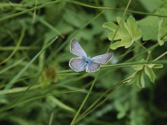 Close View of a Butterfly in Onion Valley-Marc Moritsch-Photographic Print