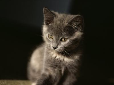 Close View of a Gray Kitten-Stephen St^ John-Photographic Print