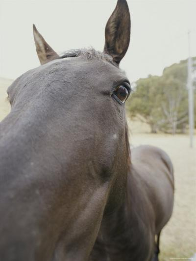 Close View of a Horses Face-Jason Edwards-Photographic Print