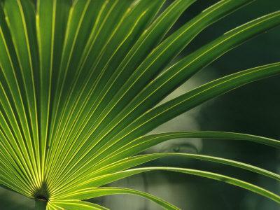 https://imgc.artprintimages.com/img/print/close-view-of-a-palm-frond_u-l-p3k35t0.jpg?p=0