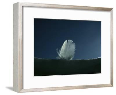 Close View of a Single Down Feather Backlit on the Snow--Framed Photographic Print