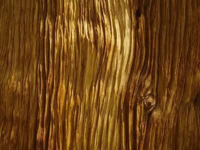 Close View of a Weathered Foxtail Pine Bark-Marc Moritsch-Photographic Print
