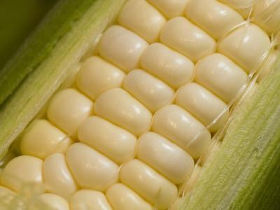 Close View of Corn-Taylor S^ Kennedy-Photographic Print