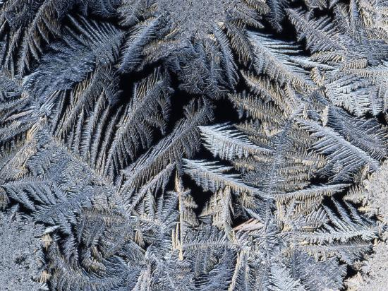 Close View of Frost Crystals-Tim Laman-Photographic Print