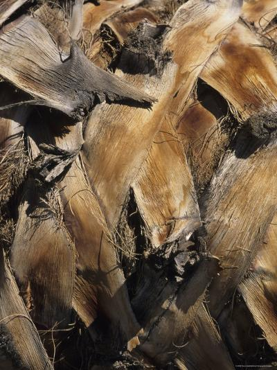 Close View of Palm Tree Bark-Stacy Gold-Photographic Print