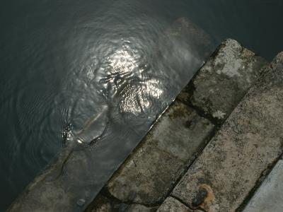 Close View of Stone Steps Leading into the Grand Canal-Todd Gipstein-Photographic Print