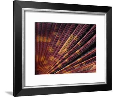 Close View of the Colorful Tentacles of a Feather Duster Worm-Darlyne A. Murawski-Framed Photographic Print