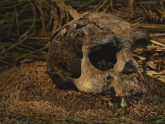 Close View of the Fossilized Skull of a Homo Erectus Found in Java-Kenneth Garrett-Photographic Print