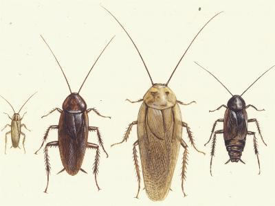 Close Views Illustrate Various Parts of a Cockroach-Paul M. Breeden-Giclee Print