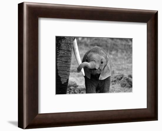 Close-Bjoern Alicke-Framed Photographic Print